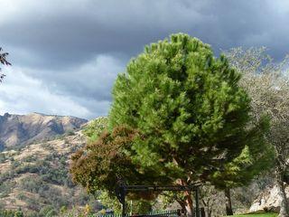 Fresno_tree