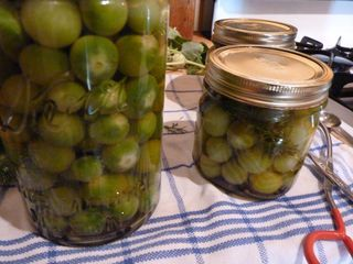 PickledGreenCherryTomatoes
