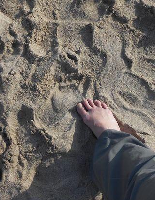 CA_BeachSand