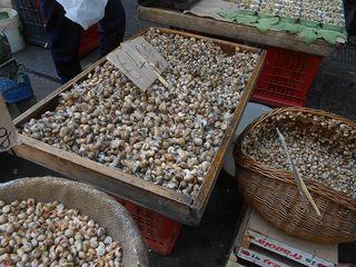 Catania_snails