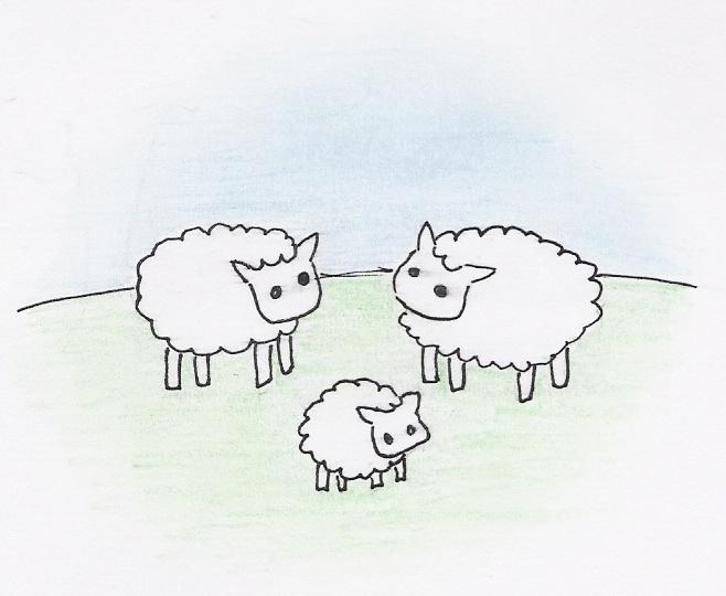 Sheepcard